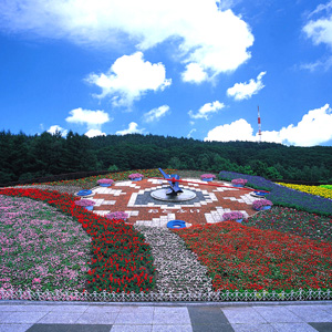 Flower Scenery Hanack & Flower Road 02